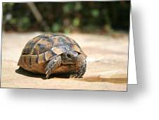Young Tortoise Emerging From Its Shell Greeting Card