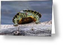 Young Turtle Greeting Card