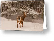 Young White Tailed Buck In Winter Greeting Card
