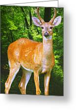 Young Whitetailed Deer Buck Digital Art Greeting Card