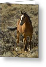 Young Wild Mare   #0307 Greeting Card