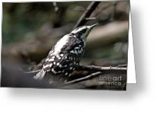 Young Woodpecker Greeting Card