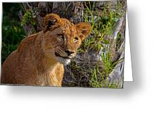 Your Lioness Greeting Card