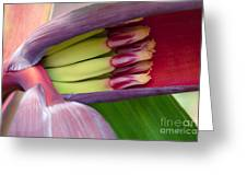 Your Treasure - Mai'a Maoli - Tropical Hawaiian Banana Flower  Greeting Card