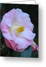 Youthful Camelia Greeting Card