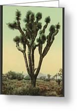 Yucca Cactus At Hesperia California Greeting Card