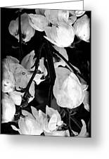 Yucca Flowers Greeting Card