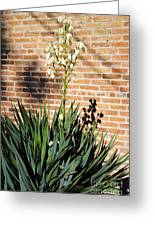 Yucca In The Morning Greeting Card
