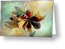 Yucca Pod - Barbara Chichester Greeting Card