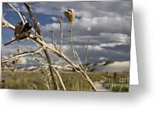 Yucca Pod Greeting Card