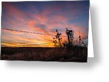 Yucca Sunset Greeting Card