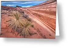 Yucca Valley Greeting Card