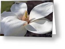 Yulan Magnolia  4591 Greeting Card