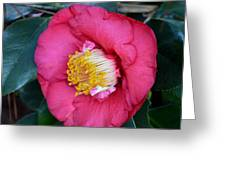 Yuletide Camelia Greeting Card