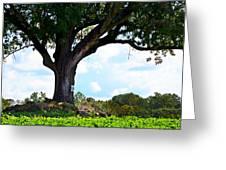 Yum Yum Tree Greeting Card