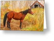 Yuma- Stunning Horse In Autumn Greeting Card