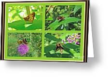 Zabulon Skipper Butterfly - Poanes Zabulon Greeting Card