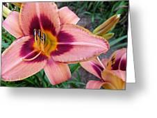 Zagora Daylilies Greeting Card