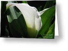Zantedeschia Named Crystal Blush Greeting Card