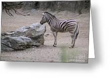 Zebra And Rock Greeting Card