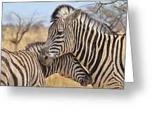 Zebra Bite Of Love Greeting Card