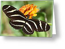 Zebra Butterfly Beauty 1 Greeting Card