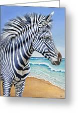 Zebra By The Sea Greeting Card