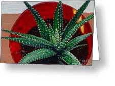 Zebra Cactus In Red Glass Greeting Card