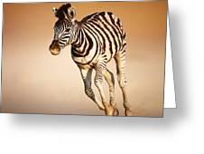 Zebra Calf Running Greeting Card