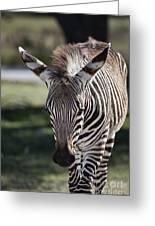 Zebra Crossing V7 Greeting Card