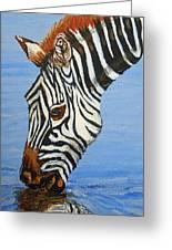 Zebra Drink Greeting Card