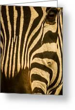 Zebra Eye Greeting Card by Jennifer Burley