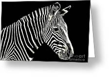 Zebra Faa Contest Greeting Card