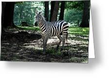 Zebra Forest 2 Greeting Card