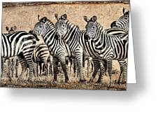 Zebra Herd Rock Texture Blend Greeting Card