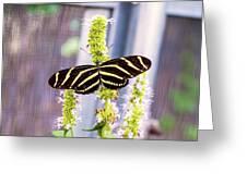 Zebra II Greeting Card