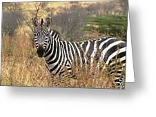 Zebra In Serengeti Greeting Card