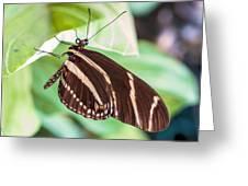 Zebra Iv Greeting Card