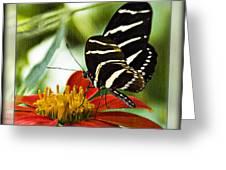 Zebra Longwing 2 Greeting Card