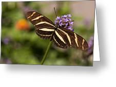 Zebra Longwing Butterfly Greeting Card