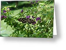 Zebra Longwing Butterfly On Flower Greeting Card