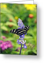 Zebra Longwing Greeting Card by Laurie Perry