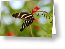 Zebra Longwing Greeting Card
