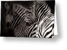 Zebra Night Greeting Card
