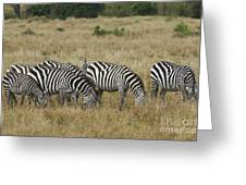 Zebra On Masai Mara Plains Greeting Card