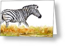 Zebra Panoramic Greeting Card