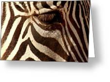 Zebra Patterns Greeting Card