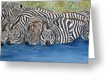 Zebra Pool Greeting Card