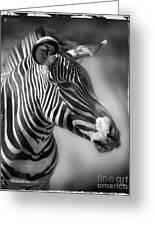 Zebra Profile In Black And White Greeting Card