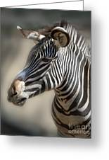Zebra Profile Greeting Card